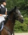 elvis-poni